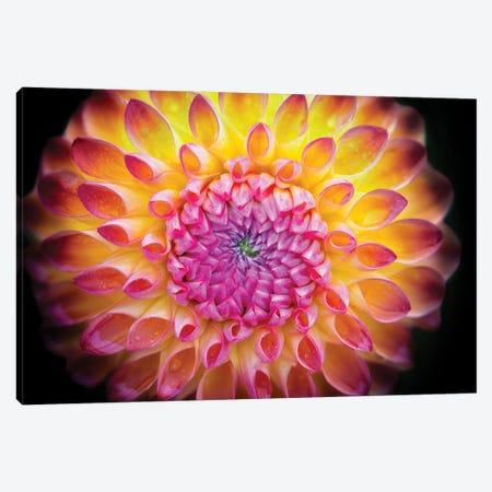 Dahlia Bloom Canvas Print #DEN787} by Dennis Frates Canvas Wall Art