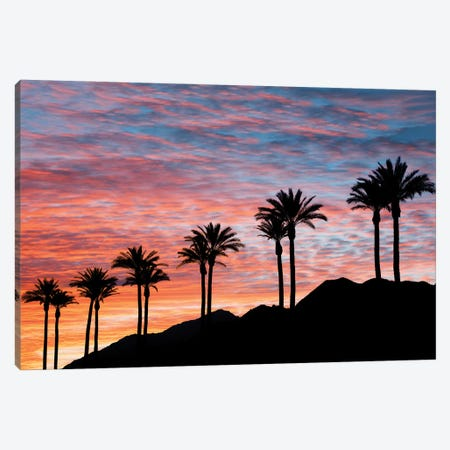 Palm Sunset IV Canvas Print #DEN791} by Dennis Frates Canvas Artwork