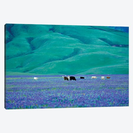 Cows In Lupine I Canvas Print #DEN81} by Dennis Frates Canvas Art Print