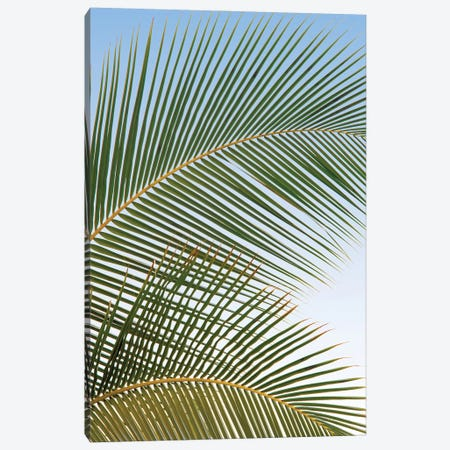 Palm Close Up II Canvas Print #DEN828} by Dennis Frates Canvas Artwork