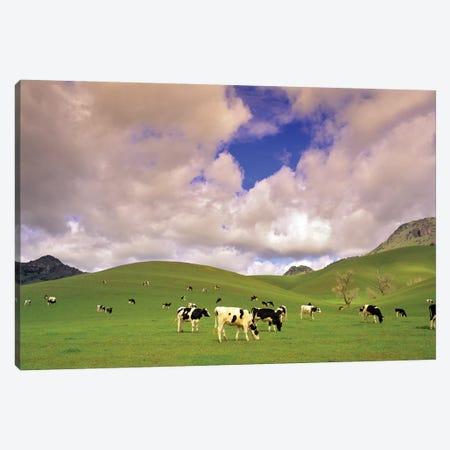 Dairy Pasture I Canvas Print #DEN88} by Dennis Frates Canvas Print