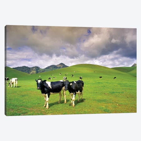 Dairy Pasture II Canvas Print #DEN89} by Dennis Frates Canvas Print