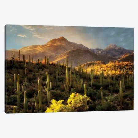 Desert Beauty Canvas Print #DEN93} by Dennis Frates Canvas Wall Art