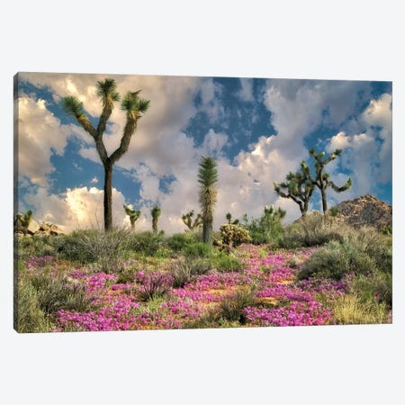 Desert Bloom Canvas Print #DEN94} by Dennis Frates Art Print