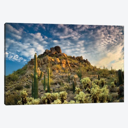 Desert Cactus Canvas Print #DEN95} by Dennis Frates Canvas Print