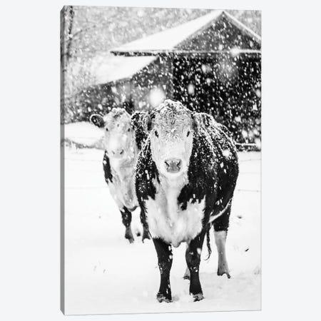 White Winter On The Farm Canvas Print #DEO98} by Debbra Obertanec Canvas Art Print