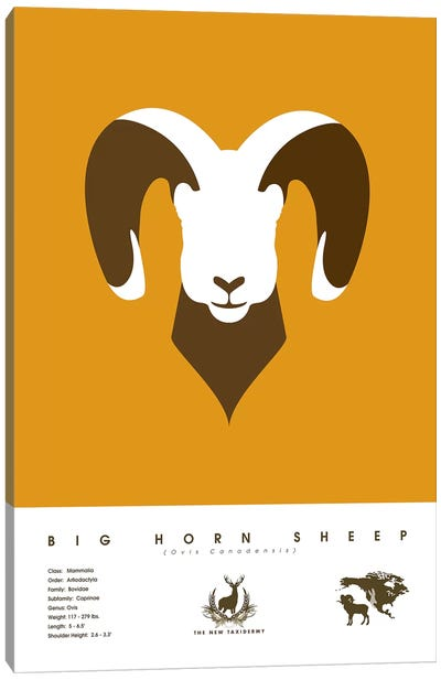 The New Taxidermy: Big Horn Sheep Canvas Print #DES28