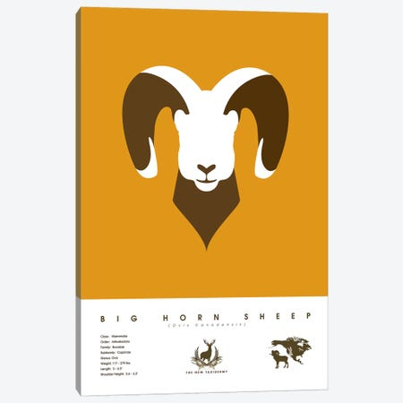 Big Horn Sheep Canvas Print #DES28} by 2046 Design Canvas Artwork