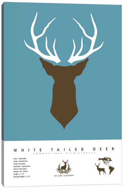The New Taxidermy: White Tailed Deer Canvas Print #DES29