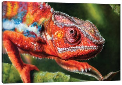 Chameleon Red Canvas Art Print