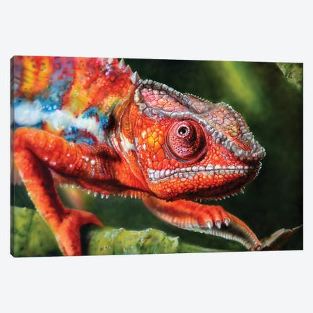 Chameleon Red Canvas Print #DET12} by Derek Turcotte Canvas Wall Art