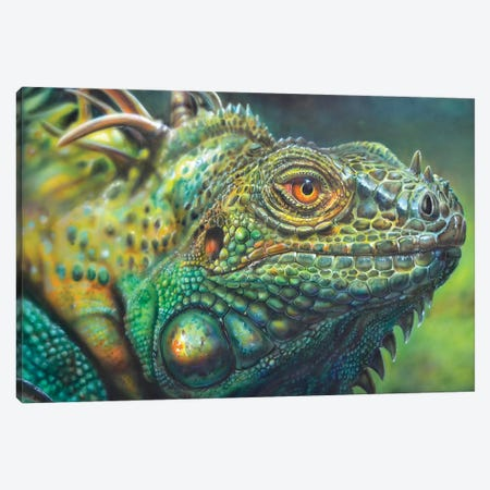 Costa Rica Iguana Canvas Print #DET14} by Derek Turcotte Canvas Print