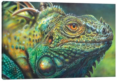 Costa Rica Iguana Canvas Art Print