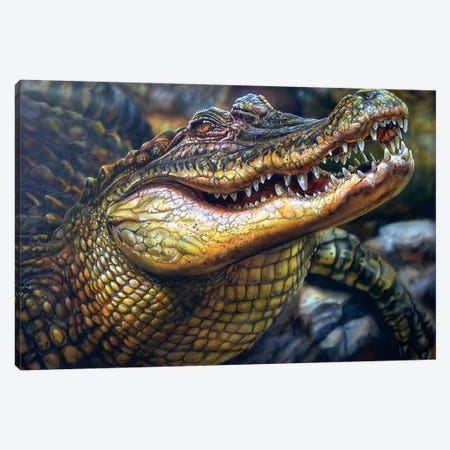 Crocodile Canvas Print #DET15} by Derek Turcotte Canvas Print