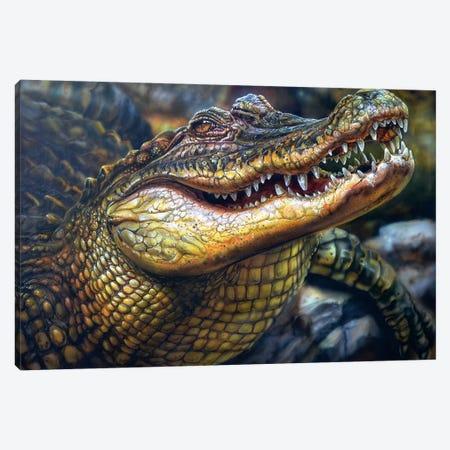 Crocodile Canvas Print #DET15} by Derek Turcotte Canvas Print