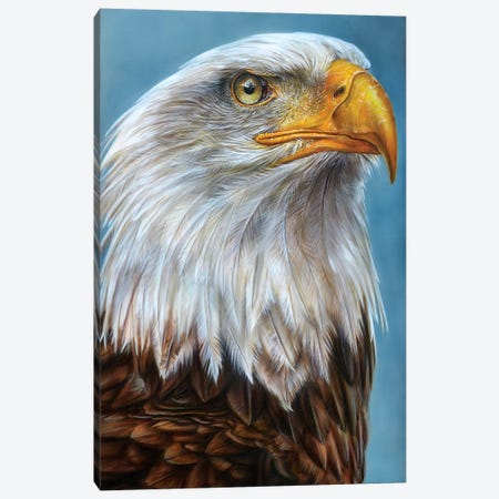 Eagle Canvas Print #DET17} by Derek Turcotte Canvas Art Print