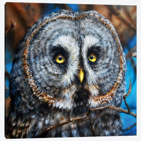 Great Grey Owl Canvas Print #DET23} by Derek Turcotte Canvas Print
