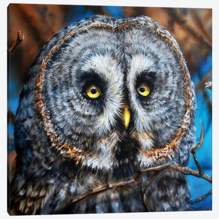 Great Grey Owl Canvas Print #DET23} by Derek Turcotte Canvas Print