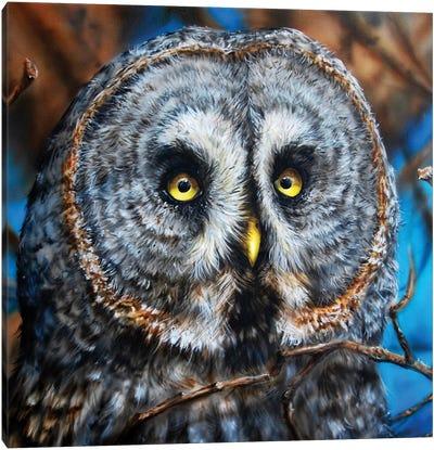 Great Grey Owl Canvas Art Print
