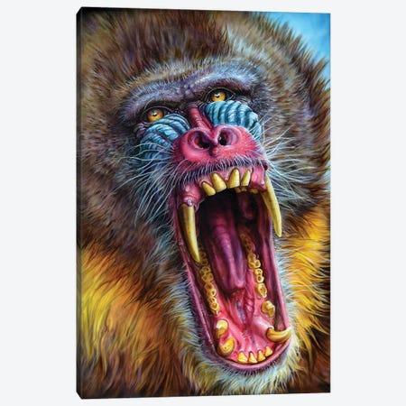 Mandrill Canvas Print #DET35} by Derek Turcotte Art Print