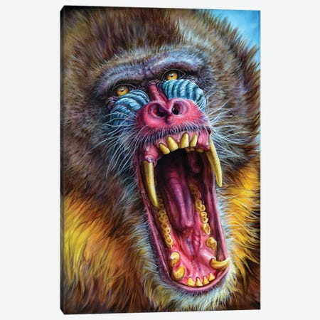 Mandrill Canvas Print #DET35} by Derek Turcotte Art Print