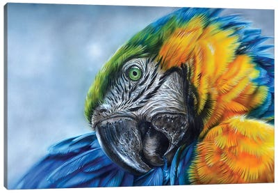 Parrot I Canvas Art Print