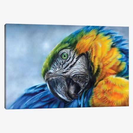 Parrot I Canvas Print #DET40} by Derek Turcotte Art Print