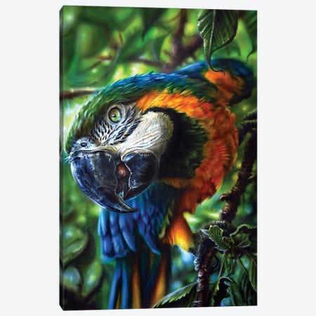 Parrot II Canvas Print #DET41} by Derek Turcotte Canvas Print