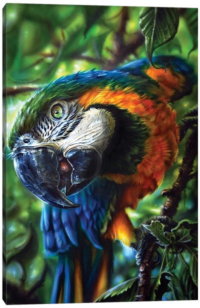 Parrot II Canvas Art Print