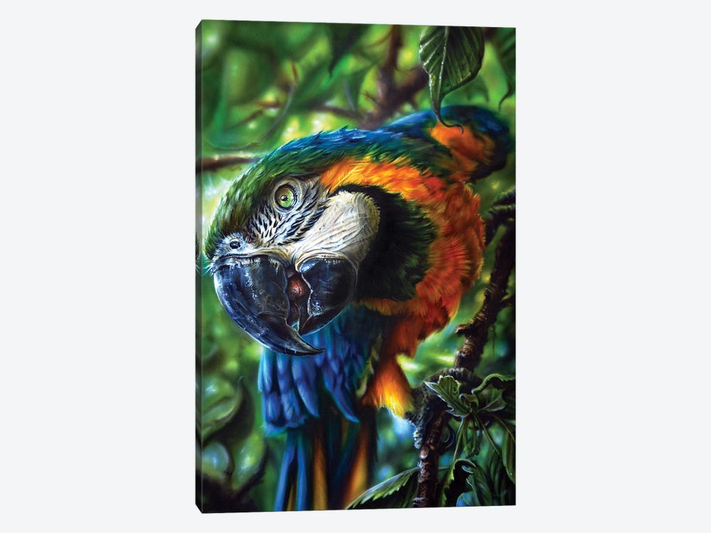 Parrot II by Derek Turcotte 1-piece Canvas Artwork