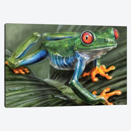 Tree Frog I Canvas Print #DET54} by Derek Turcotte Canvas Art Print