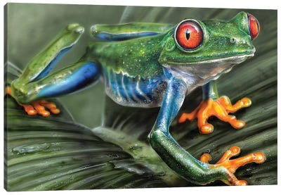 Tree Frog I Canvas Art Print