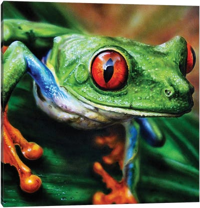 Tree Frog II Canvas Art Print