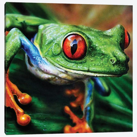 Tree Frog II Canvas Print #DET55} by Derek Turcotte Art Print