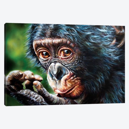 Bonobo Monkey 3-Piece Canvas #DET9} by Derek Turcotte Canvas Art