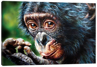 Bonobo Monkey Canvas Art Print