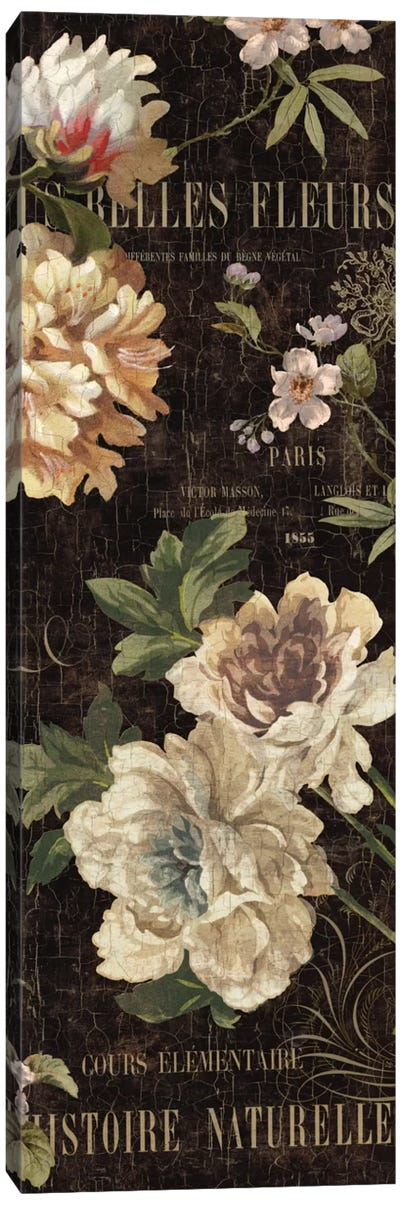 Fleurs Antique II Canvas Art Print
