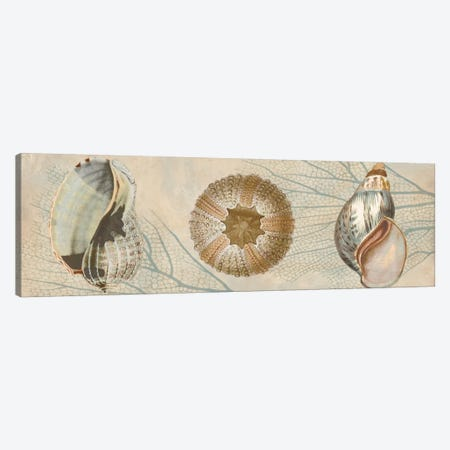 Ocean Companions II Canvas Print #DEV18} by Deborah Devellier Canvas Wall Art