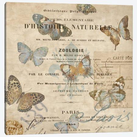 Papillon II Canvas Print #DEV24} by Deborah Devellier Canvas Artwork