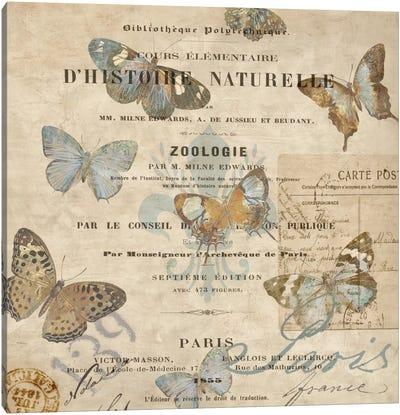 Papillon II Canvas Art Print