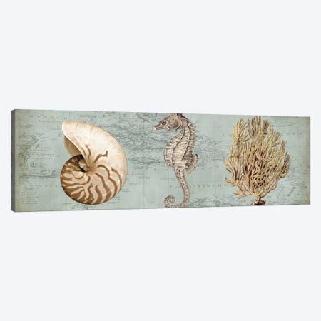 Sea Treasures I Canvas Print #DEV27} by Deborah Devellier Canvas Artwork
