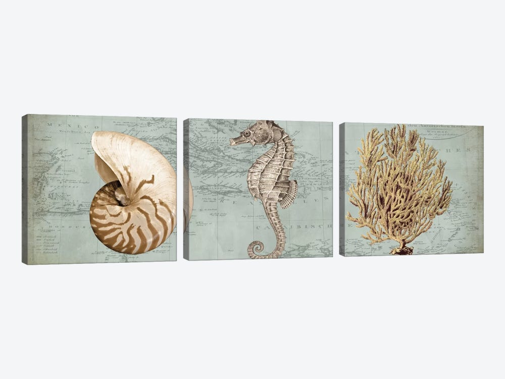 Sea Treasures I by Deborah Devellier 3-piece Canvas Art Print