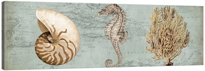 Sea Treasures I Canvas Art Print