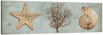 Sea Treasures II Canvas Print #DEV28