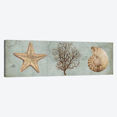 Sea Treasures II Canvas Print #DEV28} by Deborah Devellier Canvas Print