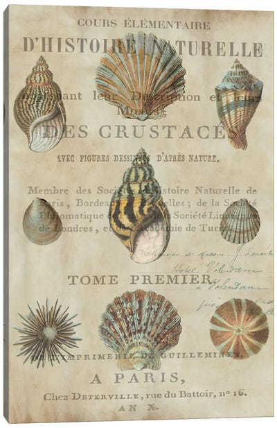 Shell Collection I Canvas Art Print
