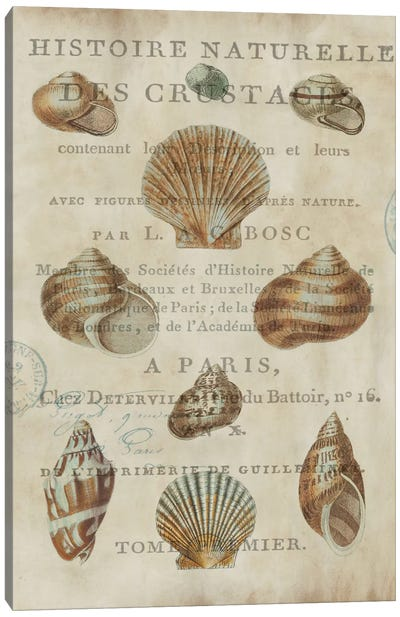 Shell Collection II Canvas Art Print