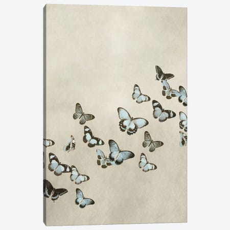 Spring Flight I Canvas Print #DEV31} by Deborah Devellier Canvas Art