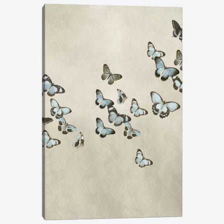 Spring Flight II Canvas Print #DEV32} by Deborah Devellier Canvas Artwork