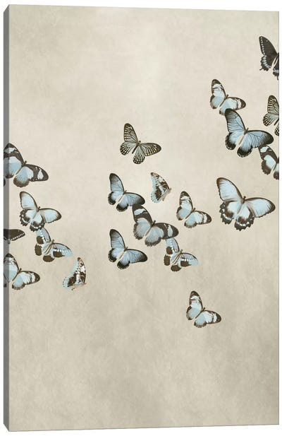 Spring Flight II Canvas Art Print